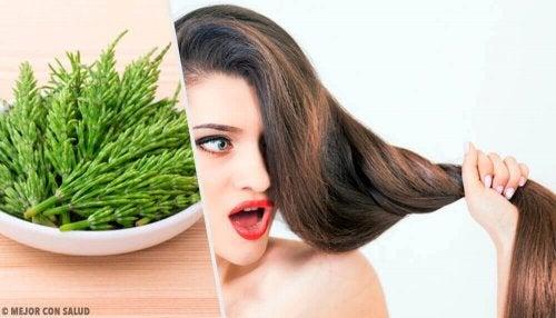 Hiusten kasvun nopeuttaminen peltokortteella