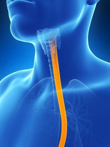 Hoida esofagiittia luontaisin menetelmin