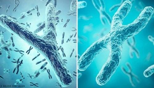 Sukupuolen geneettinen alkuperä: sukupuolikromosomit X ja Y