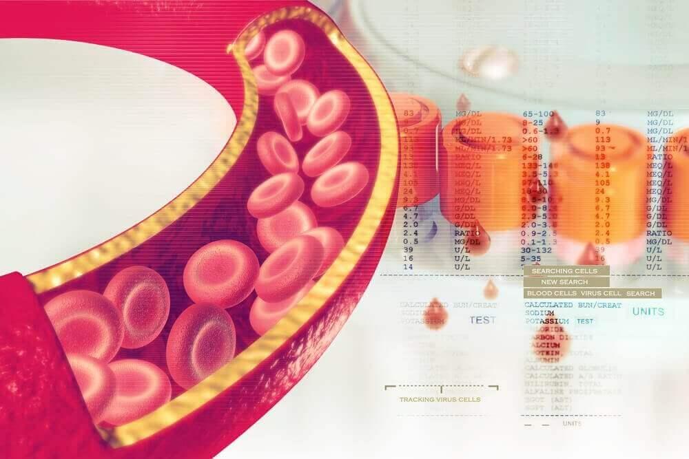 laskimot ja verisuonet