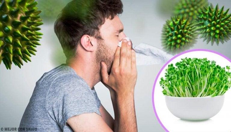 6 alfalfan syömisen hyötyä