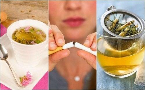 Tupakanhimon hillitseminen 5 kasvihaudukkeen avulla