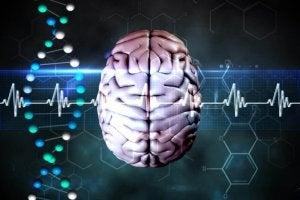 elintavoista osa on aivoille haitallista