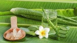 Aloe veralla on monia terveyshyötyjä
