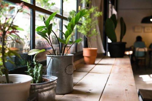 Kasvit osana kodin sisustusta