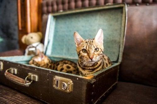 Kierrätä vanhasta matkalaukusta uusi peti kissallesi