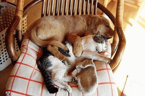 Myös lemmikkisi ansaitsee rentoutua ja nukkua omassa tilassaan