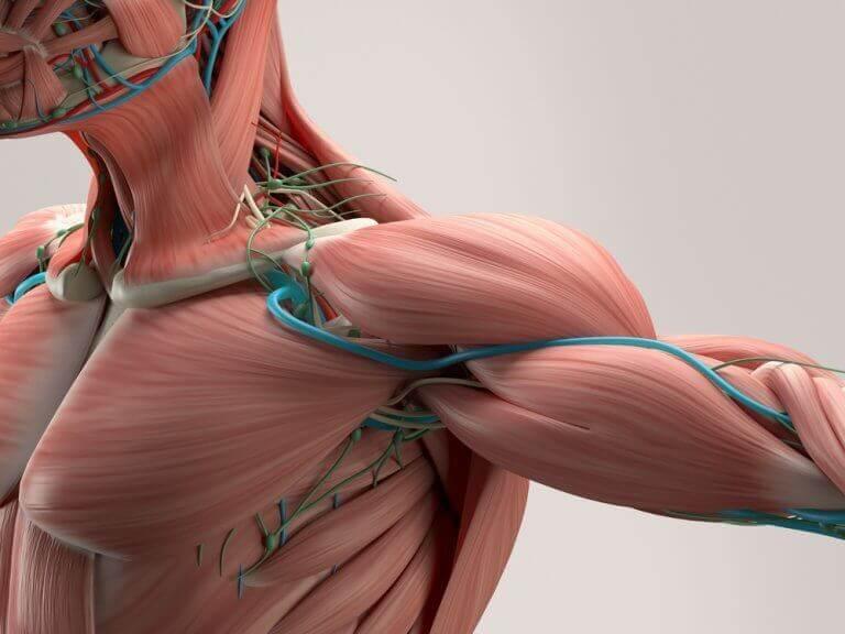 lihakset