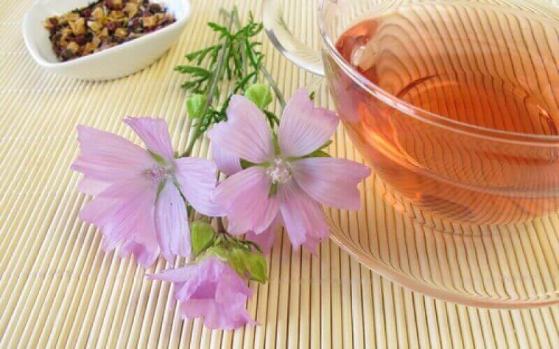 Malva auttaa vähentämään rakon tulehdusta