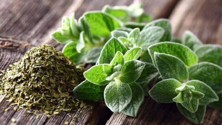 Hengitysteiden hoito oreganolla ja oliiviöljyllä