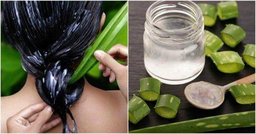 Aloe vera kosteuttaa hiuksia ja päänahkaa
