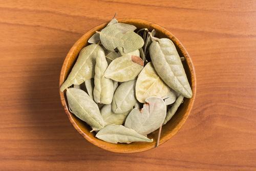 Boldon lehdet parantavat maksan terveyttä