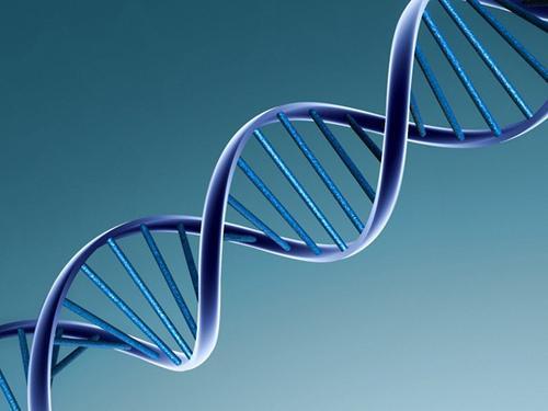 identtisten ja epäidenttisten kaksosten välisiä eroja: DNA