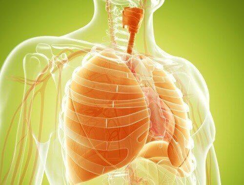 Vinkkejä keuhkojen puhdistamiseksi luontaishoidoilla
