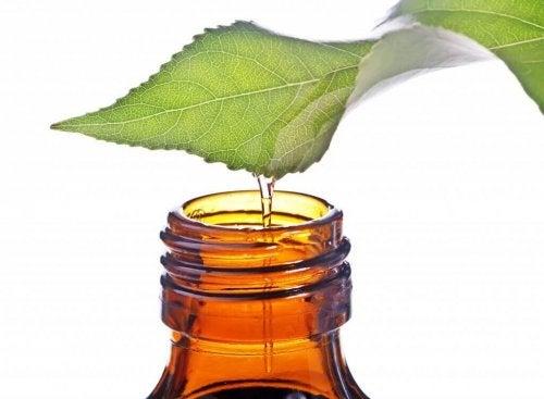 Mintun voimakas haju tunkeutuu syvälle hengityselimiin ja puhdistaa tehokkaasti keuhkoja