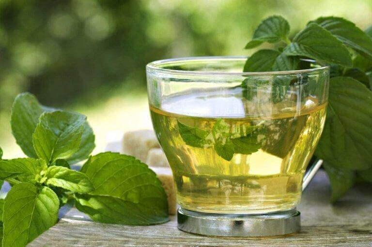 vihreää teetä ja minttua