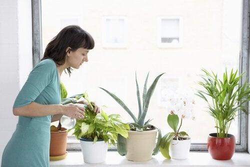 Eroon kasvituholaisista etikan avulla