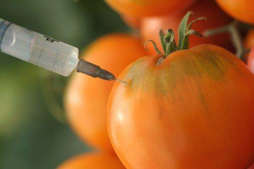 karsinogeeniset ruoat: GMO