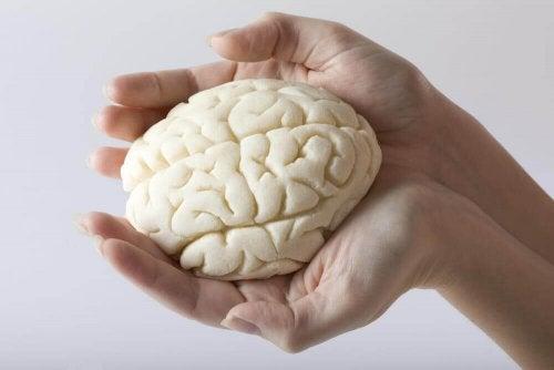 Elimistön nestetasapaino auttaa tehostamaan aivojen kapasiteettia