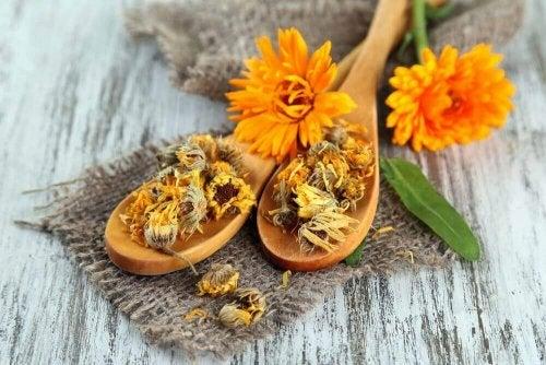 Kehäkukka on perunan ja inkiväärin tavoin tehokas luontaishoito kylmänkyhmyjen hoitoon