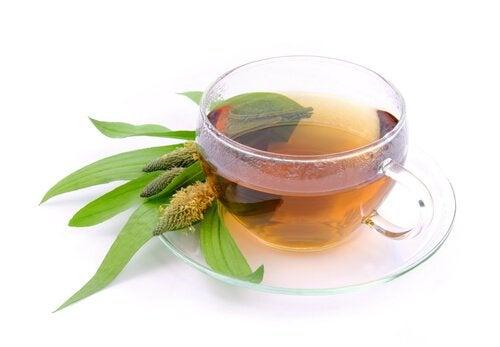Ratamosta valmistettu tee ehkäisee ja hoitaa ummetusta tehokkaasti