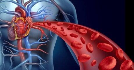 vilkastuta verenkiertoa