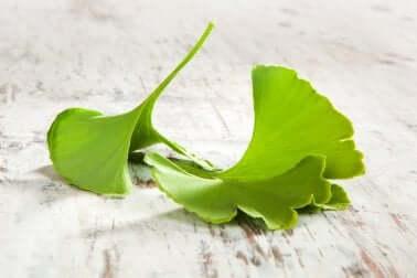 Ginkgo ja monet muut kasviperäiset lääkkeet sopivat erinomaisesti stressin ja masennuksen hoitoon