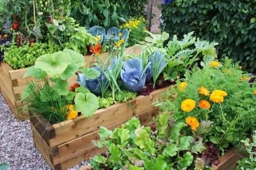 Ideoita puutarhan koristelemiseen kukilla