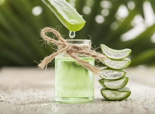 Aloe vera on mukana ihon uusiutumisessa ja kuolleen solukon poistamisessa