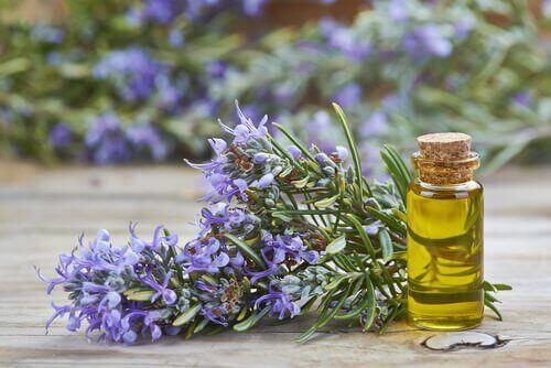 Rosmariinin eteerinen öljy hoitaa päänahkaa