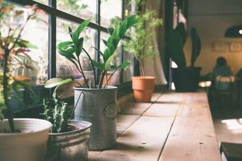 Voit uudistaa vanhat tölkit spraymaalilla kukkaruukuiksi