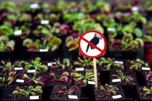 Myrkyllisiä kasveja, joita ei kannata pitää kotona