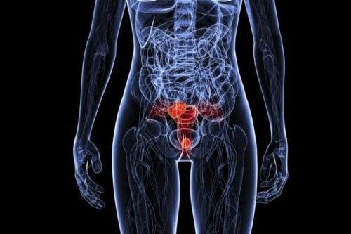 Ihmisen papilloomavirus voi ilmetä monissa eri kehonosissa