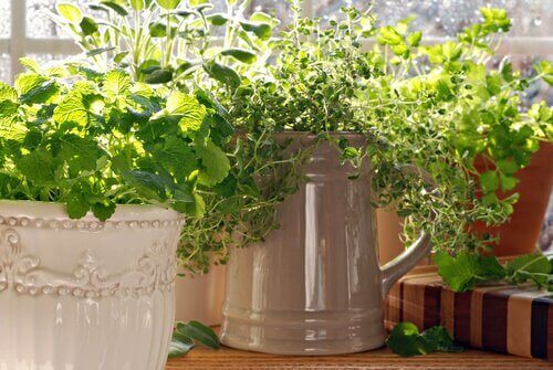 Timjami on ruoanlaitossa laajalti käytetty mauste