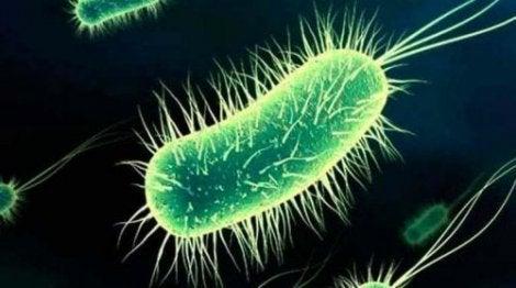 Seksin jälkeinen kystiitti johtuu yleensä Escherichia coli -bakteerista