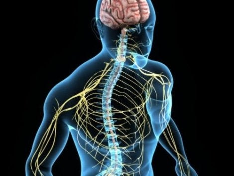 koliini auttaa hermostoon