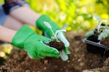Kasvien uudelleenistutus: muista nämä suositukset