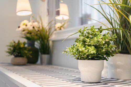 Sisäkasvien hoito: 9 perusvinkkiä