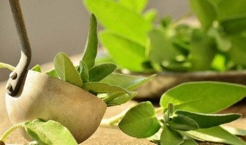 Salvia on erinomainen luonnonlääke kainaloiden epämiellyttävän hajun ja liiallisen hikoilun ehkäisyyn