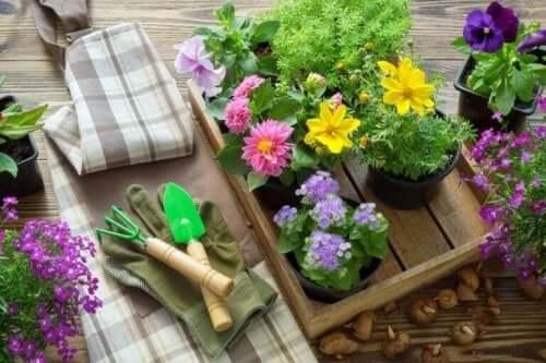 Kasvien uudelleenistutus tulee tehdä oikeaan vuodenaikaan