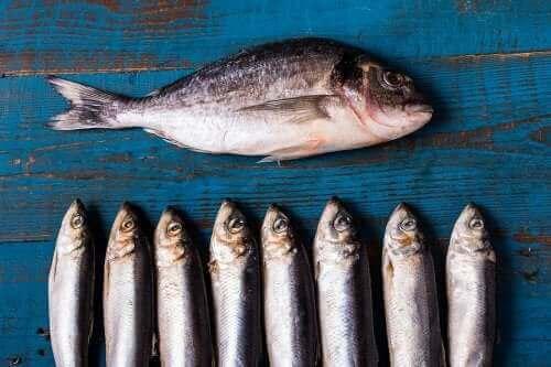 Rasvaisen kalan hyödyt terveydelle