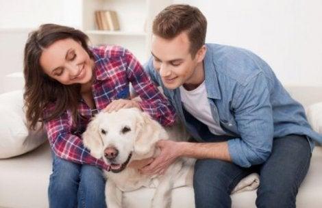 Lemmikki on osa perhettä