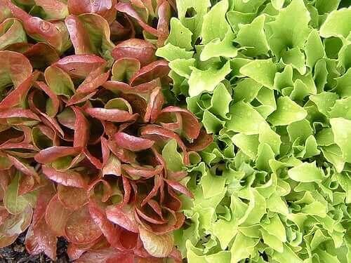 Salaatinlehdet