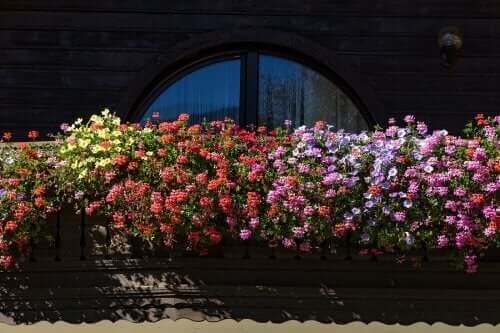 Viisi tuoksukukkaa pieneen puutarhaan