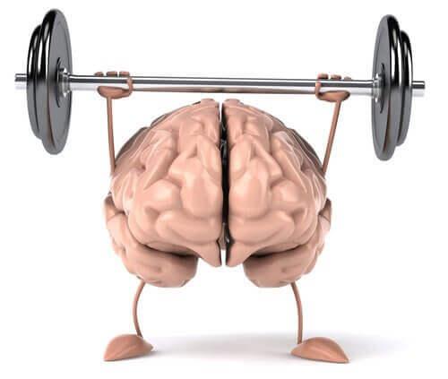 Aivot nostavat painoja.