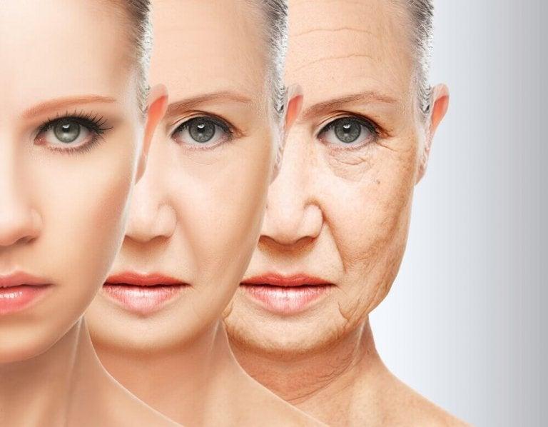 Ennenaikaisen ikääntymisen ehkäisy ruokavaliolla