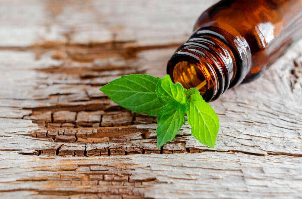 Puolanmintun terveyshyödyt saa käyttämällä kasvia sekä ulkoisesti että sisäisesti