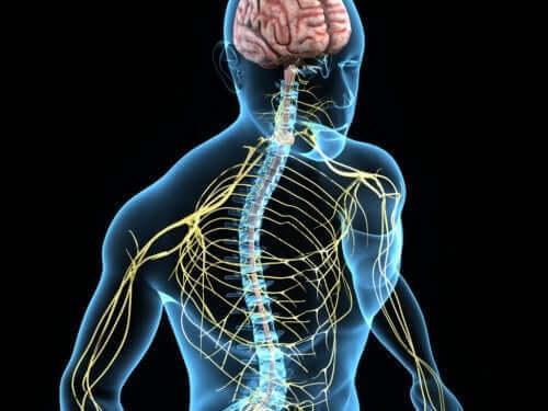 Essentiaalinen vapina liittyy hermoston muutoksiin