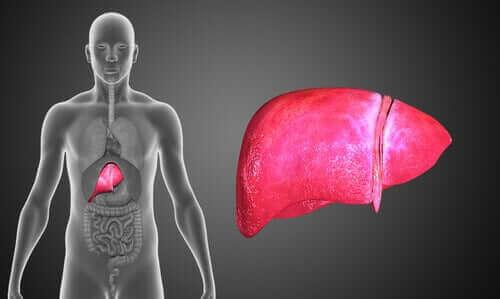Sappitieatresia on krooninen maksasairaus