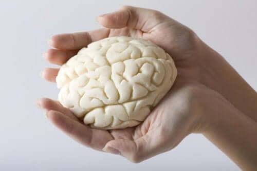 Aivolohkot määritellään anatomisesti, eli sen mukaan, missä aivojen osassa kukin aivolohko sijaitsee